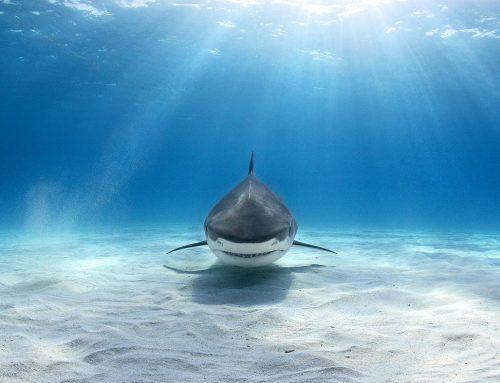 La Pecera del Tiburón